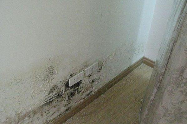 Vệ sinh nấm mốc tường