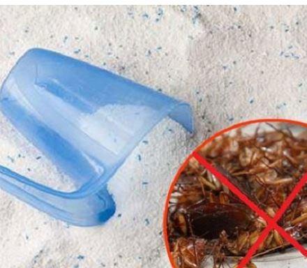 Cách diệt chuột bằng bột giặt