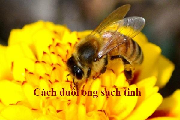 Cách đuổi ong