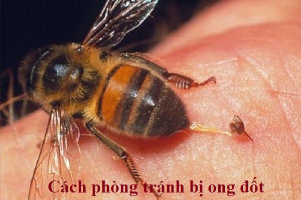 Cách phòng tránh bị ong đốt: