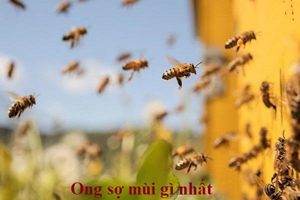 Ong sợ mùi gì nhất